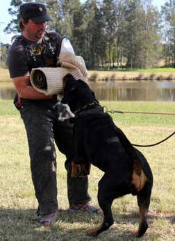 All You Must Know About a Rottweiler Attack