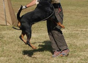 Rottweiler Pups Training Tips